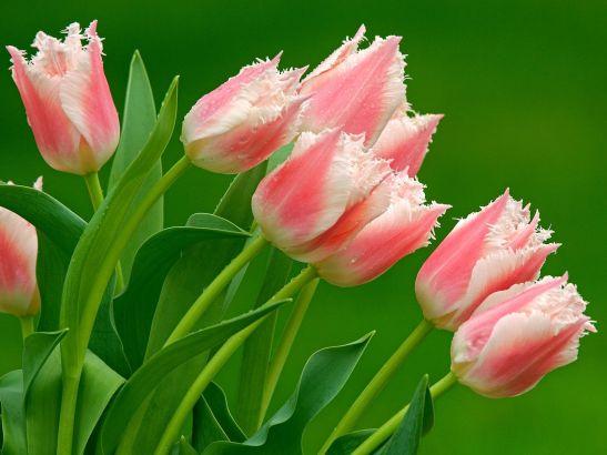 flowers of the green gardenNYNAV