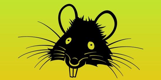 MEDIA RATS